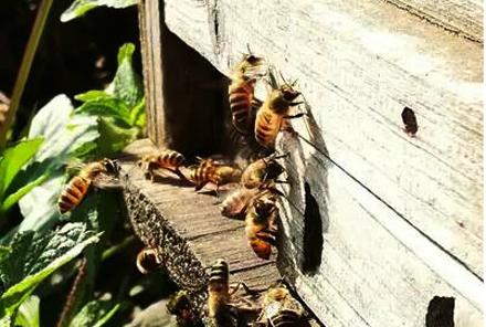 【广东省内包邮】二斤装鸭脚木蜂蜜,仅售138元,尊享市场价168元